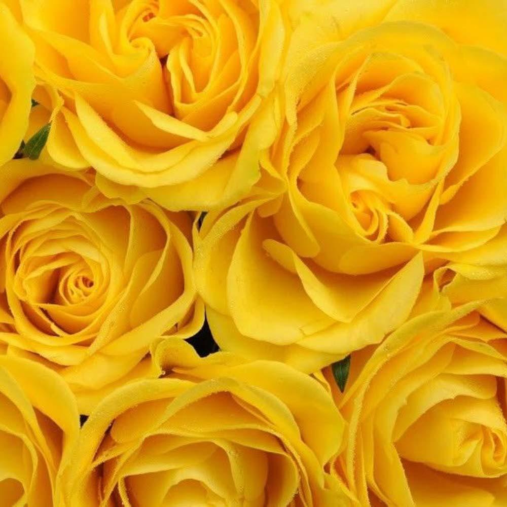 Картинки желтая роза, деды